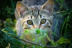 cat-1144799__340