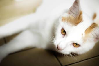 Moz, adopté en juillet 2016