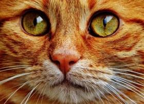 cat-1046497__340