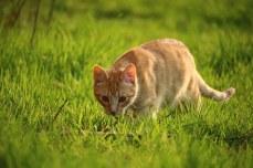 cat-1325371__340