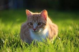 cat-1337040__340