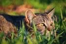 cat-1337106__340