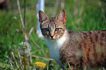 cat-1366215__340