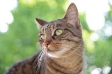 cat-1500498__340
