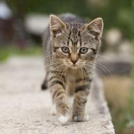 cat-1506960_960_720