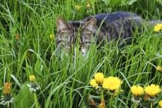 cat-1516358__340