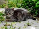 cat-1534438__340