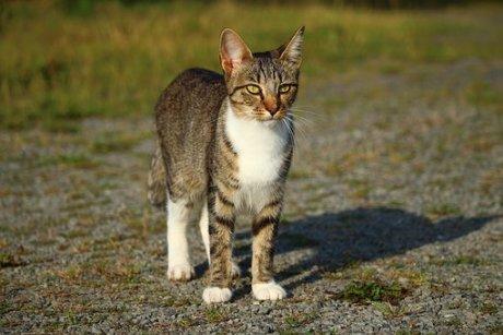 cat-1589374__340