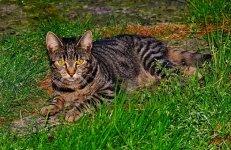 cat-1617090__340