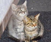 cat-1690258__340
