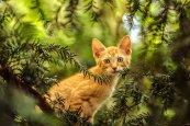 cat-1716838__340