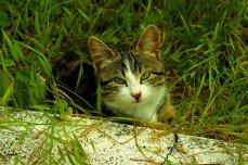 cat-1730243__340