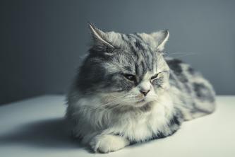 cat-1897224_960_720