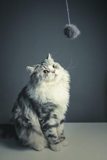 cat-1897232_960_720