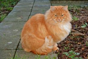 cats-1132409_960_720