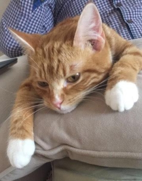 Toffee, adopté en fev 2017